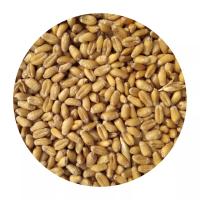 Солод пшеничный 1 кг.